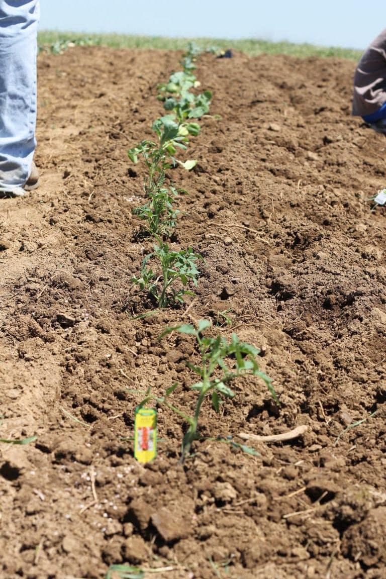 gardening rows