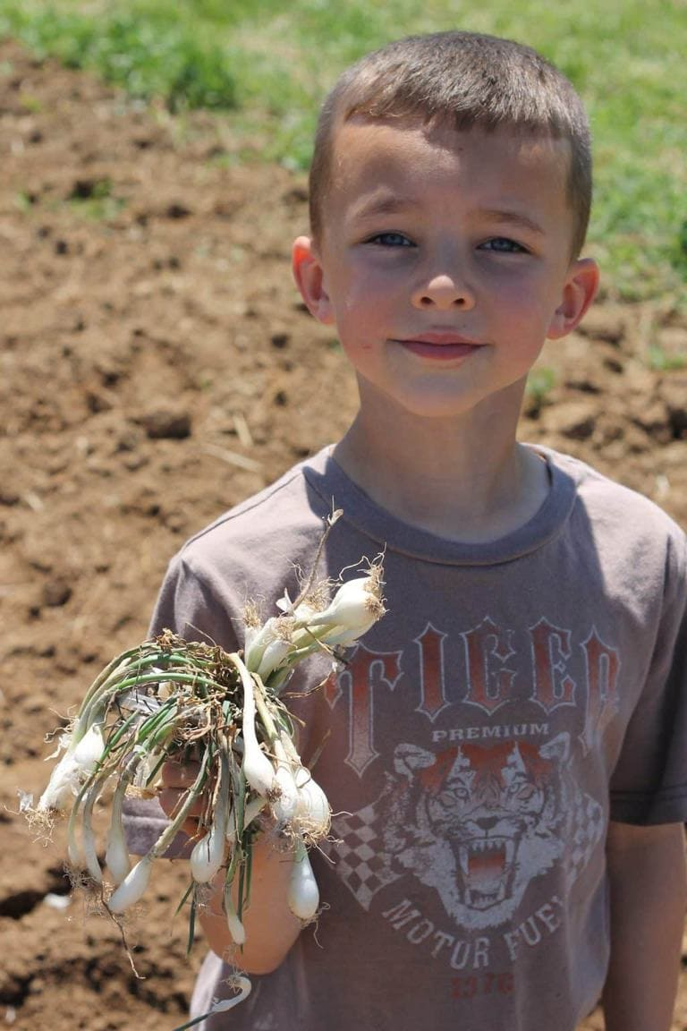 Logan holds onion starts before we put them in the ground.