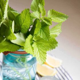 fresh lemon balm leaves