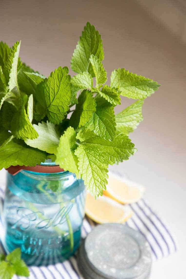 a close up of the leaves of the lemon balm plant in a blue mason jar