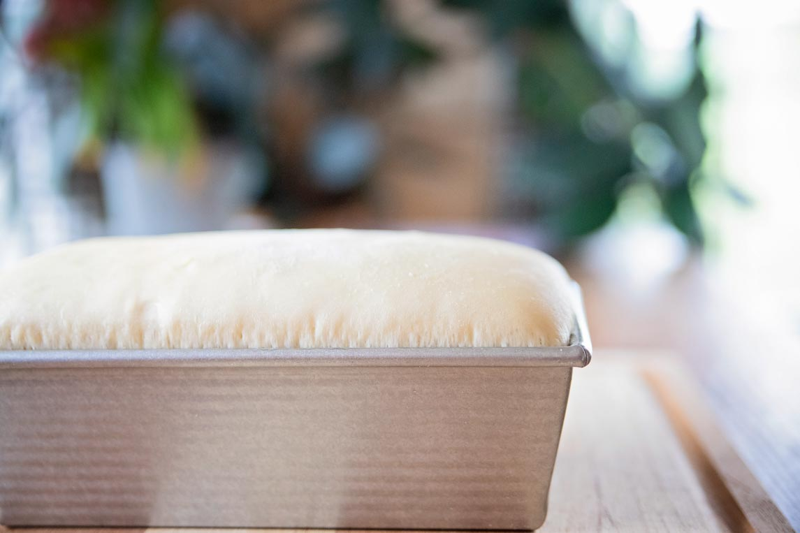 """a side view of bread risen 1"""" above the rim of the loaf pan"""