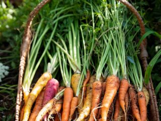 a basket of carrots in a garden